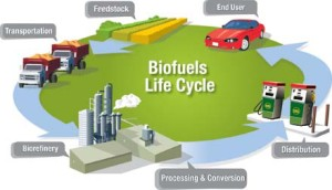 BiofuelLifeCycle